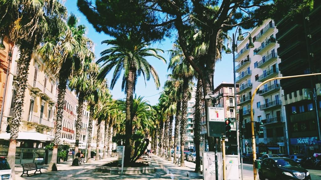 palmy na ulicy w Bari