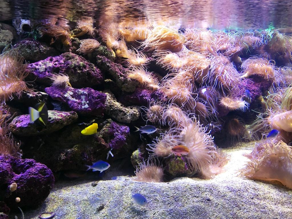 Kolorowa rafa koralowa w Aquarium w Sydney