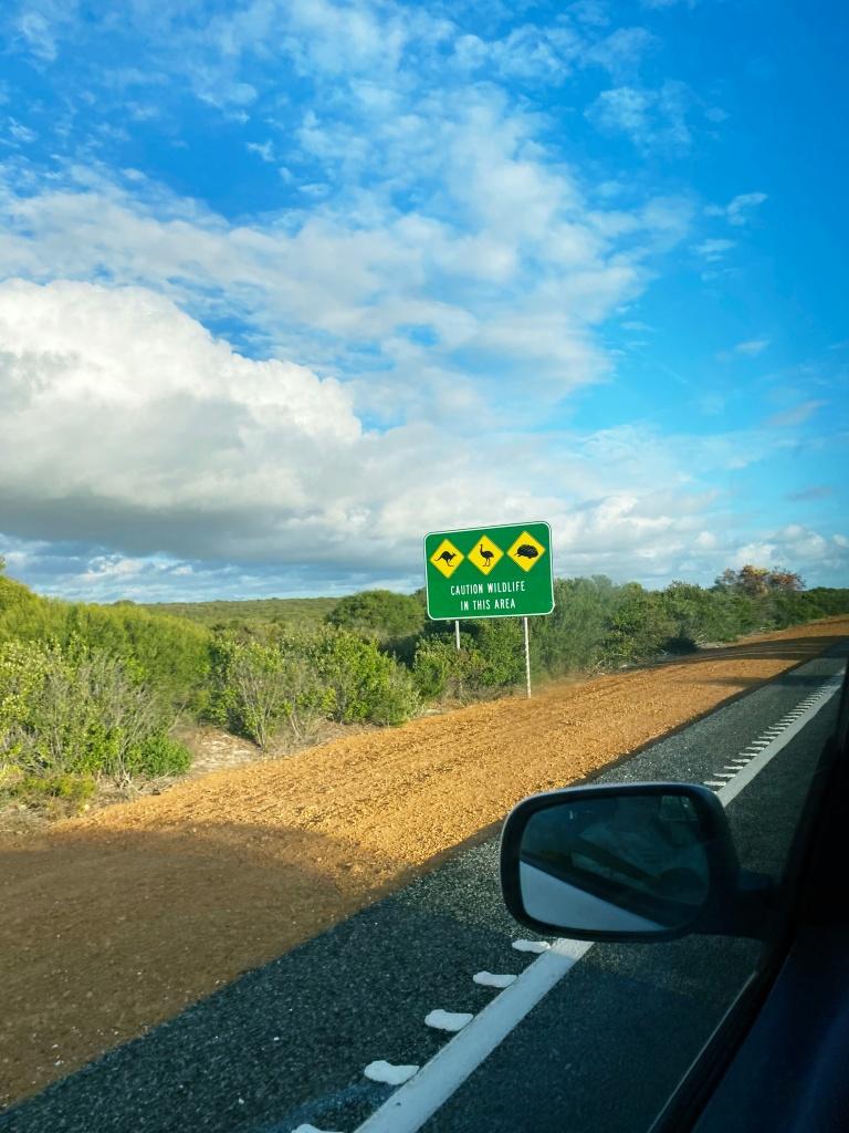 widok z samochodu na pobocze w Australii